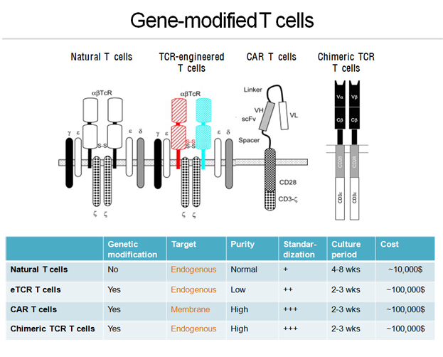Gene-modified T cells